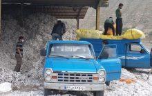 افزایش ۴۰ درصدی خرید تضمینی وش پنبه در آذربایجان شرقی