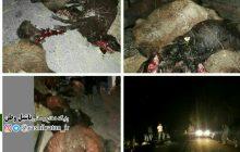 تصادف در جاده روستای وانلوجق شهرستان مرند
