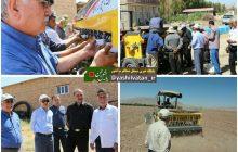 کاشت دانه روغنی کلزا برای اولین بار در مرند