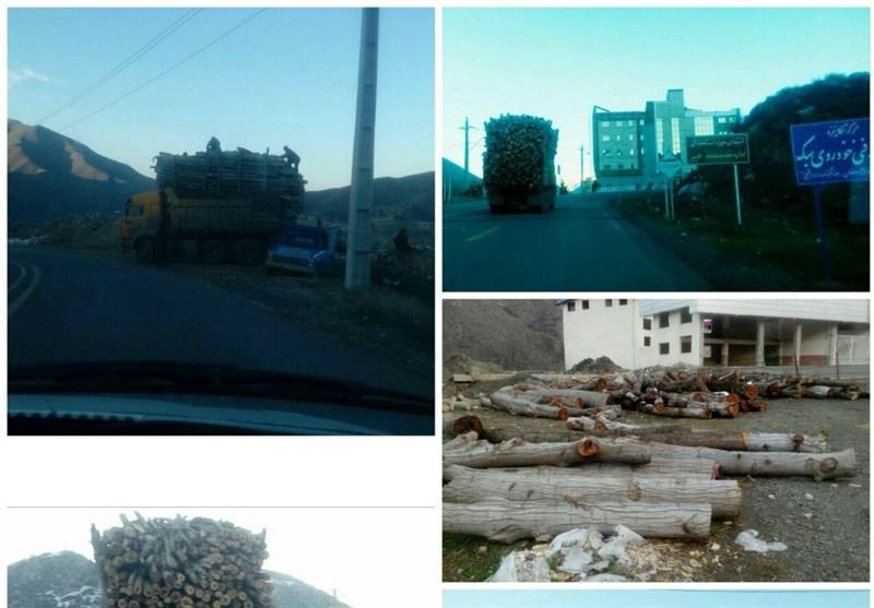 قطع گسترده درختان در بهشت گمشده آذربایجان/ تیغ تیزِ تبرهای سوداگران بر تَن درختان ارسباران