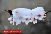 بارش برف سنگین بهاری در آذربایجان شرقی به روایت تصویر