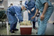 آخرین سفر پسر خردسال با اهدای عضو رقم خورد/ جان دوباره به ۳ بیمار + عکس