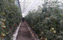 افزایش بهرهوری تولیدات کشاورزی نیازمند توسعه کشت گلخانهای است