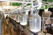 سازمان ملی استاندارد: نظارت و کنترل شیر تولیدی کشور بسیار سختگیرانه است